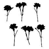 silhouettes of carnations