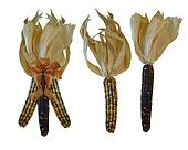 Indian corn on white background