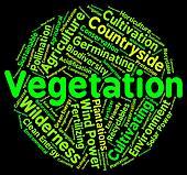Vegetation Word Indicates Plant Life And Botany