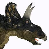 Diceratops Dinosaur Head