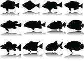fish collection vector silhouettes