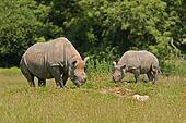 rhino/young 8791