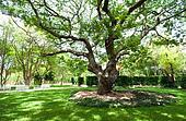 Shade from tree