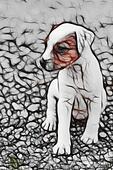 Cute Parson Russell Terrier