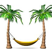 Hammock On Tall Palm Trees
