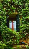 window and ivy vines