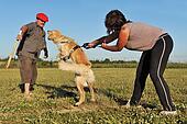 training of attack dog