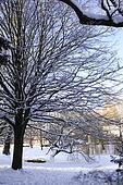 Snowcovered tree