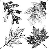 Four Grungy Fall Leaves