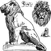 Vector Lions