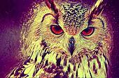 Owl portrait. Digital paint