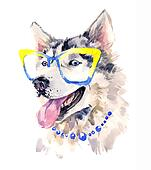 Fashionable coquettish siberian sheepdog