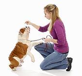 teaching a dog to sit pretty