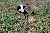 Bird - Wildlife Sanctuary - Uganda
