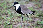 Bird - Wildlife Sanctuary - Uganda