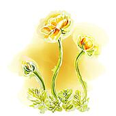 Flower yellow background, watercolor
