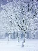 Snowy white park