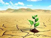Seedling in the desert