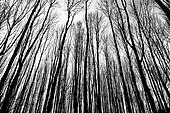 branches of winter trees