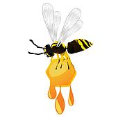 Wasp and honey