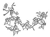 drawing orchid branch