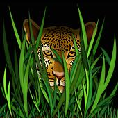 leopard head in grass