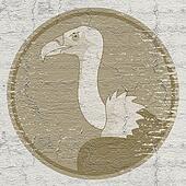 Old vulture