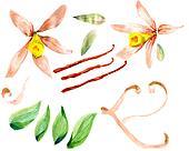 Flower sketch watercolor set