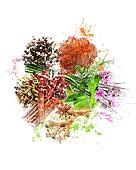 Watercolor Image Of Spices And Herbs