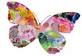 Pastel Painted Butterfly