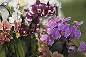 orchid in spring