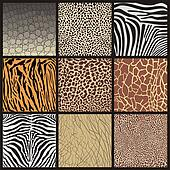 Camouflage of African animals
