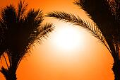 silhouette of palm tree against sun