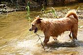 Dog in the river