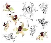 orchid branch set