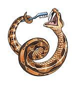 The Gabon viper