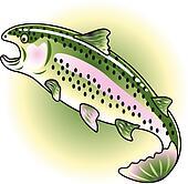 Rainbow Trout Clip Art