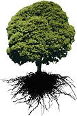 VECTOR Tree and its roots