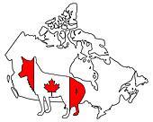 Coyote Canada