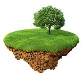 Lawn with a tree