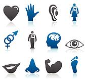 Icons of parts of a body