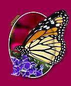 Monarch Design