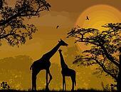 Two  giraffes on jungle