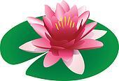 Floating pink lotus