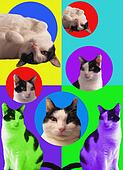 POPart Cats