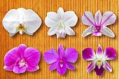 Collection set of Orchid Flower heads