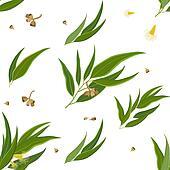 Diagonal pattern Eucalyptus leaves