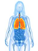 overweight female - lung