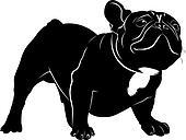 Dog Bulldog. The dog breed bulldog.