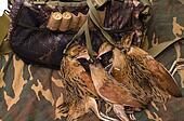 Fowling bag and bird.